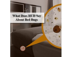 What Does HUD Say About Bed Bugs